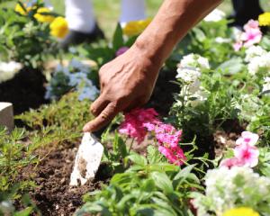 plantingflowers